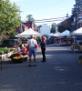 rsz_shepherdstown_farmers_market-tricia_copy