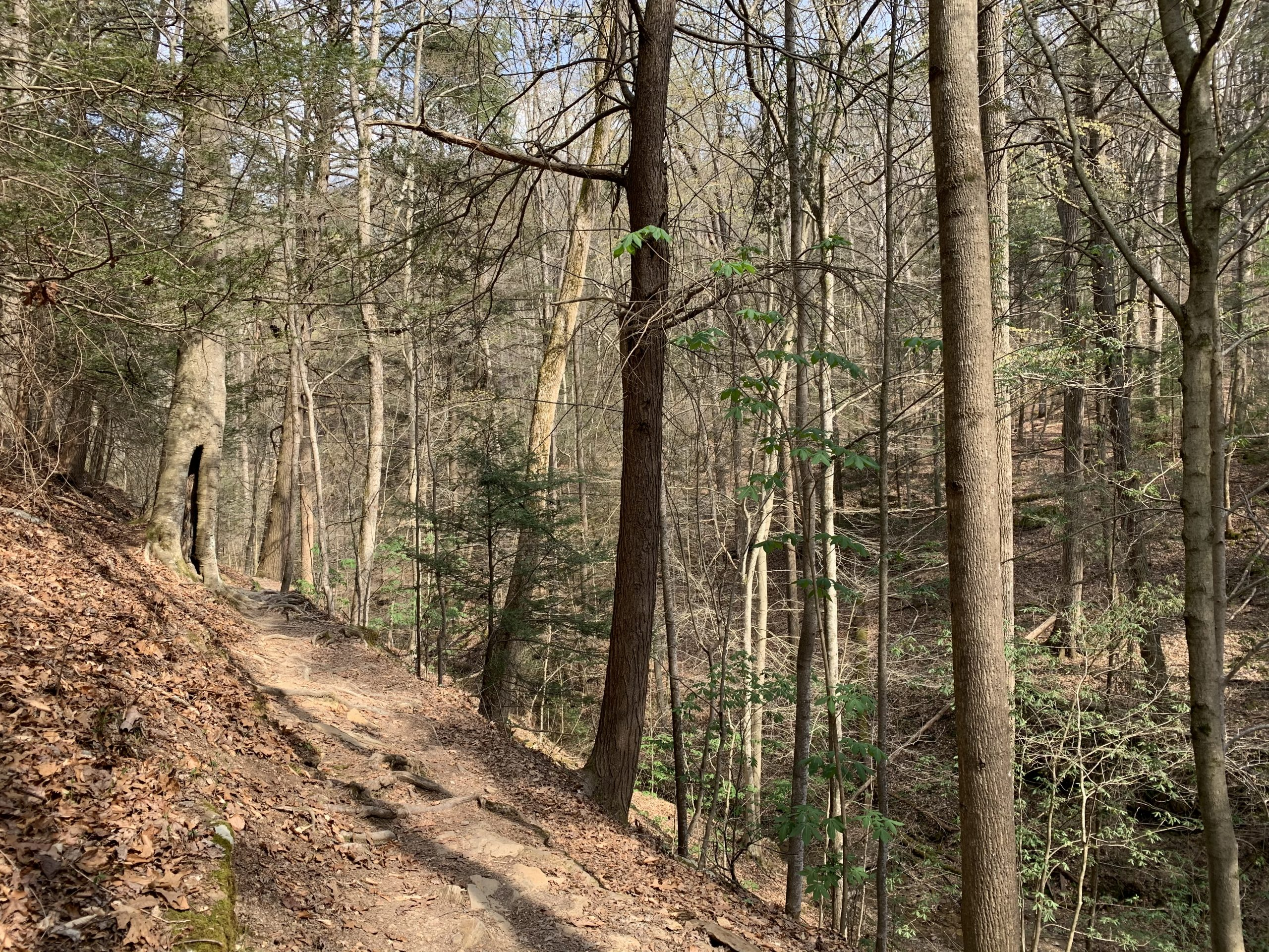 On sunny days, the natural light casts through the tall hickory trees that line the Alice Knight Memorial Trail. ALL PHOTOS BY AMANDA BARBER